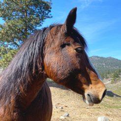 Alina-horseriding-trailriding-ausritt-780x780