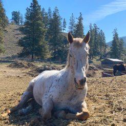 Bellamie-horseriding-trailriding-ausritt-780x780