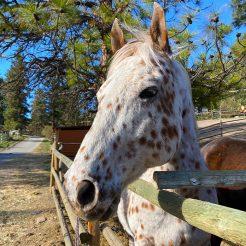 Hoodie-horseriding-trailriding-ausritt-780x780