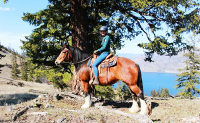 Horses-horseback-riding-trail-ride-summerland-bc