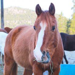 Indie-horseriding-trailriding-ausritt-780x780