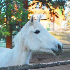 Julia-horseriding-trailriding-ausritt-780x780