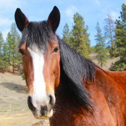 Lilly-horseriding-trailriding-ausritt-780x780