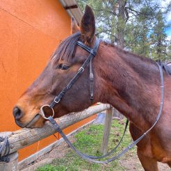 Sage1-horseriding-trailriding-ausritt-780x780
