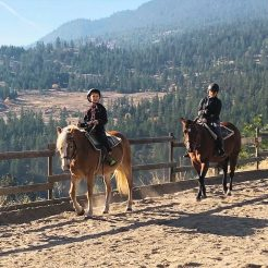 horse-boarding-lesson-horseriding-clinique-summerland-bc-780x780