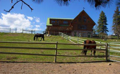 horse-boarding-summerland-penticton-trail-ride-summerland-780x480